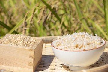 玄米(庄内産ひとめぼれ)
